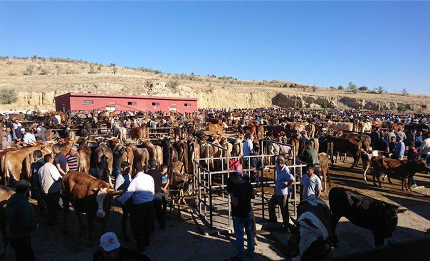 Nevşehir'de hayvan pazarı yeniden açılıyor